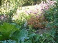 Children's Garden (2)